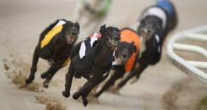 Crayford Racecards Greyhound Racing Tips
